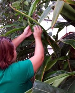 Formación: cursos de jardinería