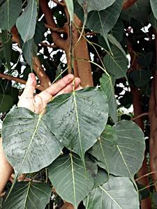 azuljardines.com_cursodejardineria_6