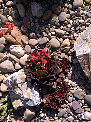 azuljardines.com_diseño_instalacion_jardines_Maca_11