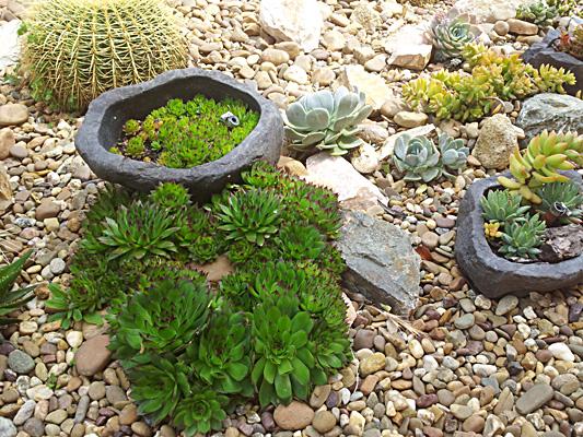 azuljardines.com_diseño_instalacion_jardines_Maca_7