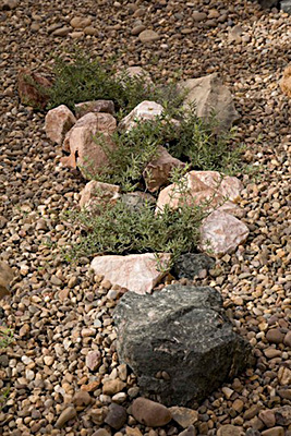 azuljardines.com_diseño_instalacion_jardines_comunidad_Torneo_2