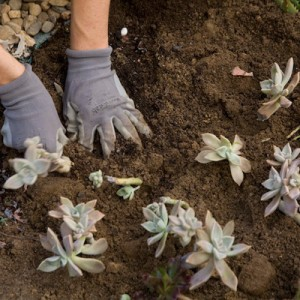 azuljardines.com_diseño_instalacion_jardines_comunidad_Torneo_3