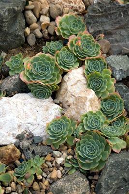 azuljardines.com_diseño_instalacion_jardines_comunidad_Torneo_4