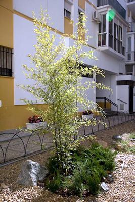 azuljardines.com_diseño_instalacion_jardines_comunidad_Torneo_6