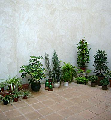 azuljardines.com_diseño_instalacion_jardines_patio_Juan_antes_3
