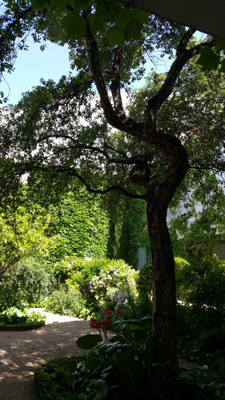 azuljardines.com_mantenimiento_periodico_jardin_Asunta_13