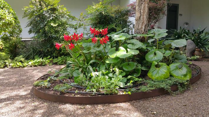 azuljardines.com_mantenimiento_periodico_jardin_Asunta_15