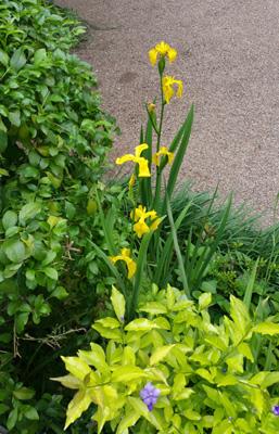 azuljardines.com_mantenimiento_periodico_jardin_Asunta_5
