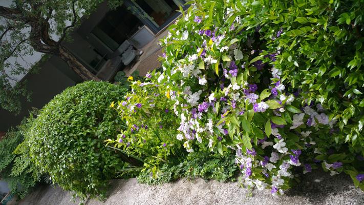 azuljardines.com_mantenimiento_periodico_jardin_Asunta_6
