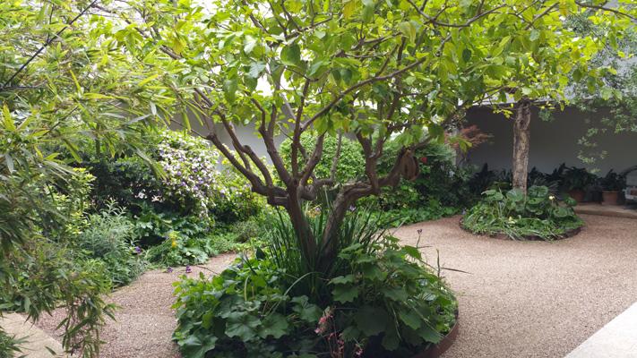 azuljardines.com_mantenimiento_periodico_jardin_Asunta_9
