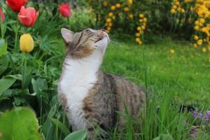 azuljardines.com_mascota en jardin