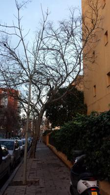 azuljardines.com_podas_grandesarboles_antes_1
