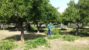 Curso Jardinería ecológica Alamillo_Redes