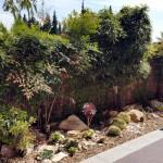 azuljardines.com_diseño_instalacion_jardines_particular_MLuisa_4
