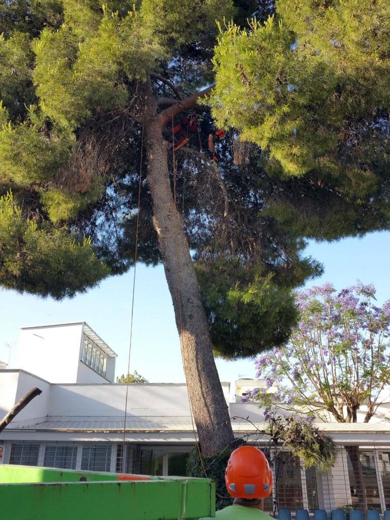 azuljardines.com_podas arboles_trabajando_suelo_3