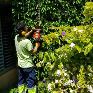 azuljardines.com_recorte-setos_setos_5