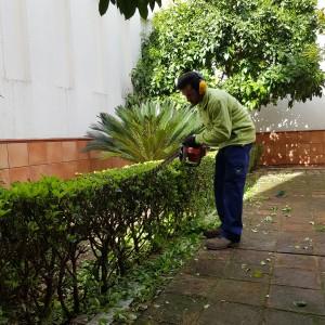 azuljardines.com_recorte-setos_setos_6