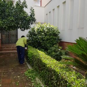 azuljardines.com_recorte-setos_setos_8