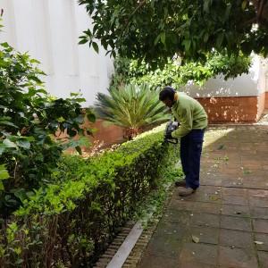 azuljardines.com_recorte-setos_setos_9