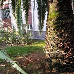 azuljardines.com_tratamiento_ataque_picudorojo_palmeracanaria