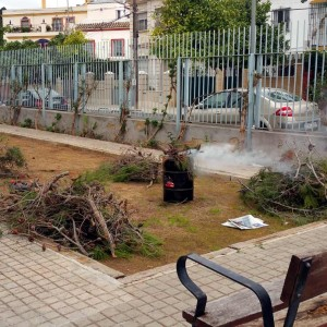 azuljardines.com_tratamiento_quema_bolsones_procesionaria