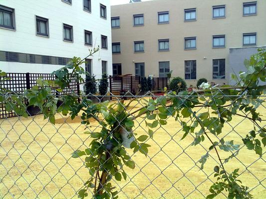 azuljardines.com_diseño_instalacion_jardines_residencia_Geron_3
