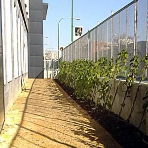 Diseño e instalación de jardín provisional. Residencia de Mayores Gerón