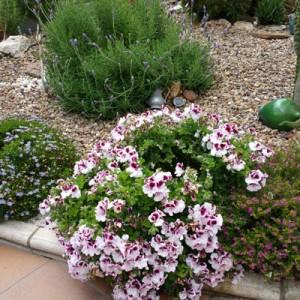 Diseño e instalación de jardín y mantenimiento puntual en jardín particular, Mairena del Aljarafe (Sevilla)