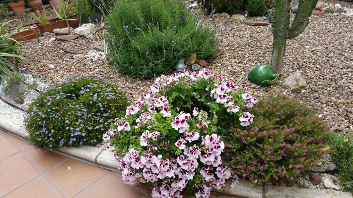 azuljardines.com_mantenimiento_puntual_jardin_Ang_4
