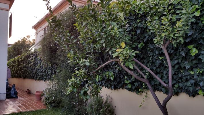 azuljardines.com_mantenimiento_puntual_jardin_Yol_1