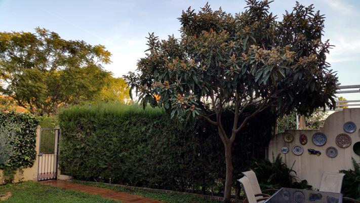 azuljardines.com_mantenimiento_puntual_jardin_Yol_4