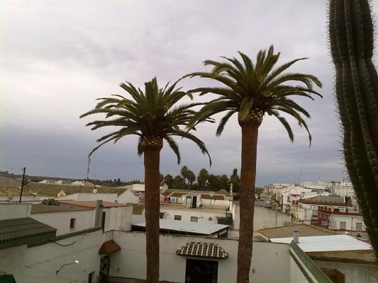 azuljardines.com_poda_palmeras_1
