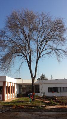 azuljardines.com_podas_arbol_1