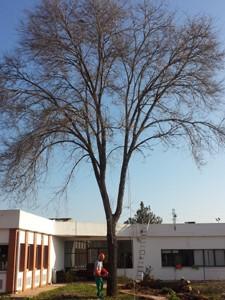 Poda y apeo de árboles