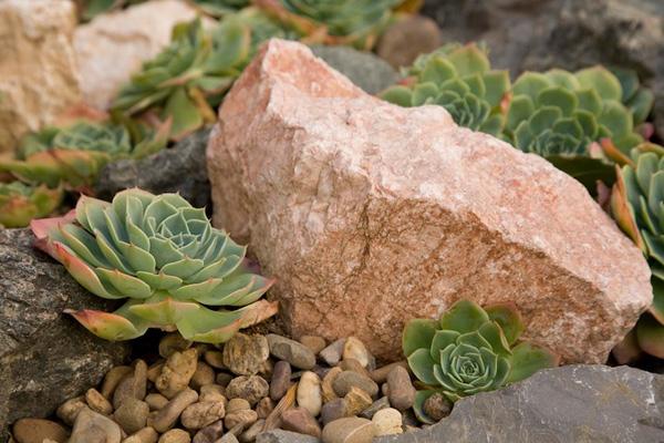 azuljardines.com_diseño_instalacion_jardines_comunidad_Torneo_1