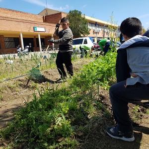 Educación ambiental. Luces de Barrio 2017: CEIP Andalucía de Sevilla