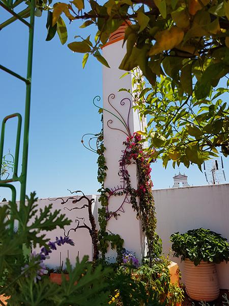 azuljardines.com_diseño-e-instalacion-jardines_Gerona-mantenimiento_12