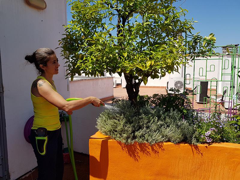 azuljardines.com_diseño-e-instalacion-jardines_Gerona-mantenimiento_19