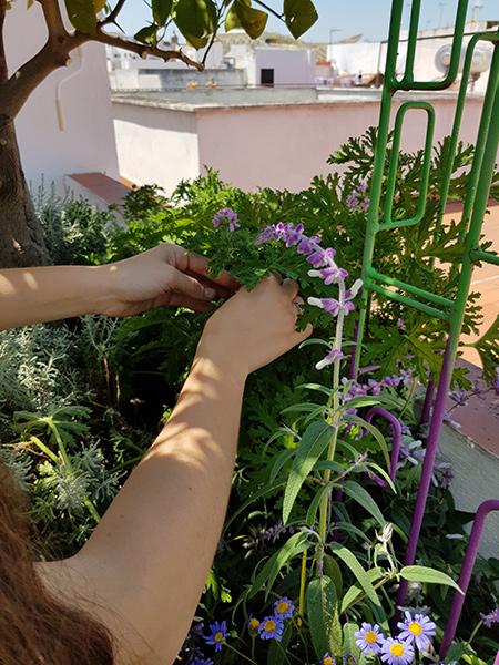 azuljardines.com_diseño-e-instalacion-jardines_Gerona-mantenimiento_2