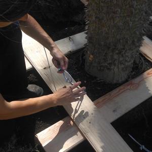 Diseño jardines. Trasplante árbol Chorisia Speciosa, Palo Botella en Salúcar de Barrameda, Cádiz.