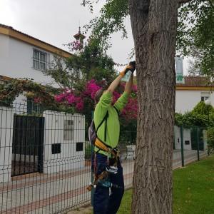 azuljardines.com_tratamiento-galeruca-del-olmo_11