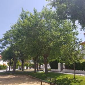 azuljardines.com_tratamiento-galeruca-del-olmo_3